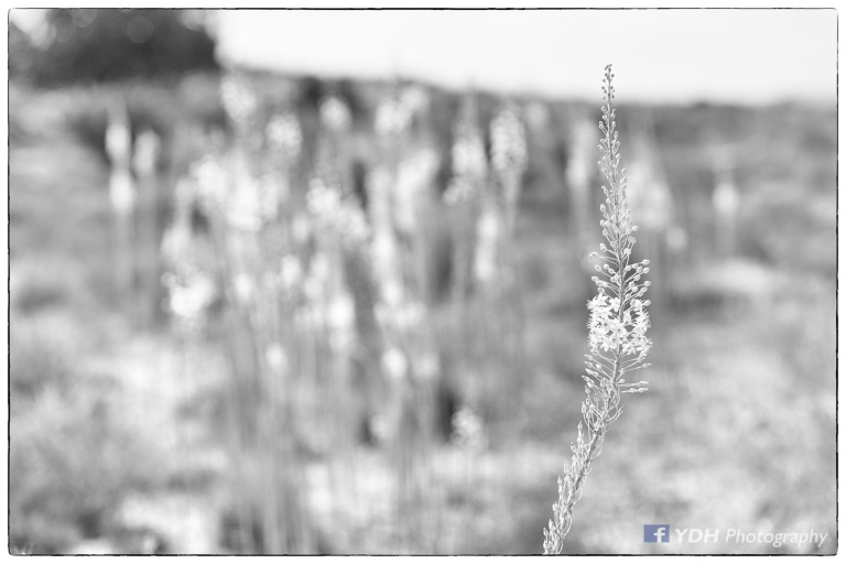 YDH_7593_20170926_Squill-Edit